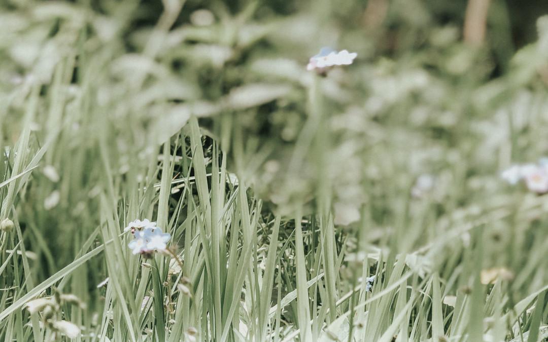 Junisonne und Kräuterwiesen im Südschwarzwald